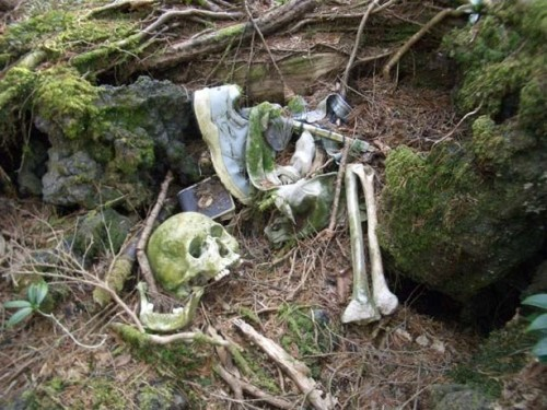 Aokigahara-forest-of-suicides-012